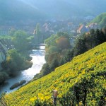 Alsace Puts a Spring in Our Palate