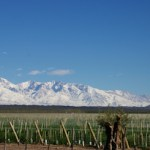 Argentina: Value and Variety at Every Tier… Taking Malbec to the Next Level