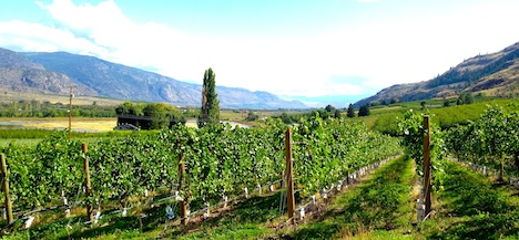 Looking north from Stoneboat Vineyards in Oliver, BC