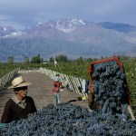Malbec World Day: Argentina's Favourite Makes its Mark