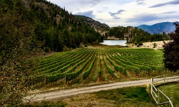 The idyllic lakeside setting at Nighthawk Vineyards