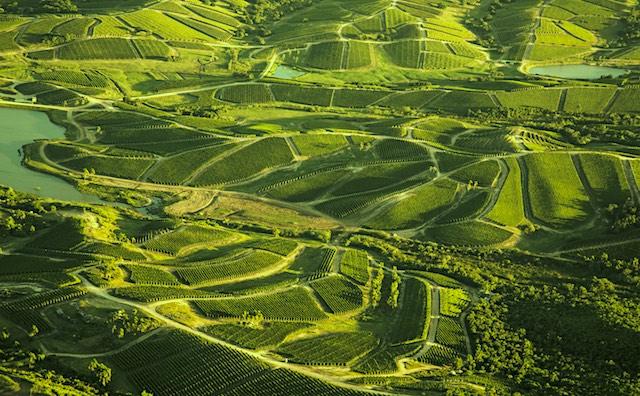 Bodega garzon vineyards supplied