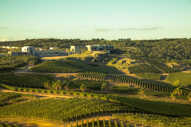 Bodega Garzon Winery and Vineyard