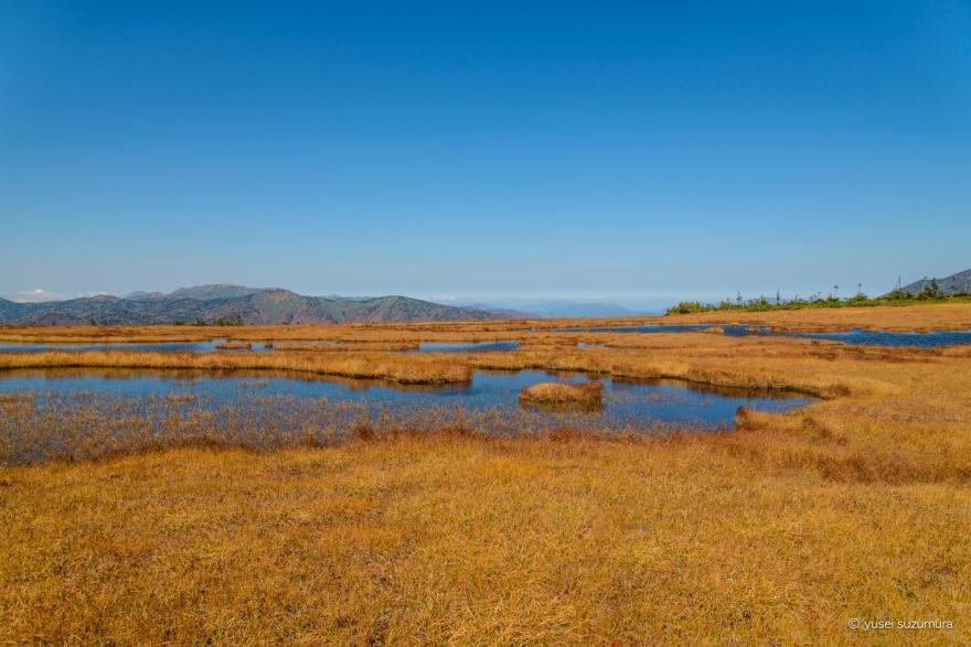 アヤメ平の湿地