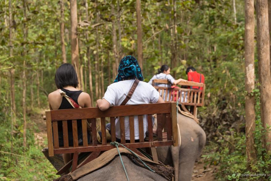 ジャングル 象使い ルアンパバーン