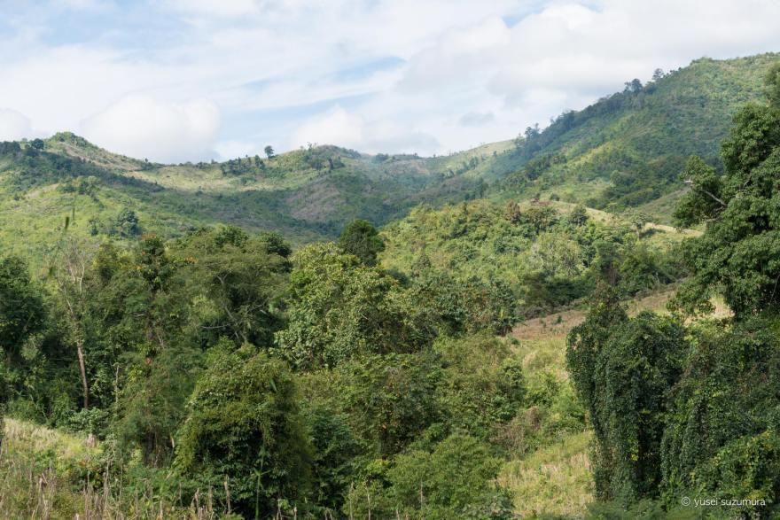 ラオス ジャングル トレッキング