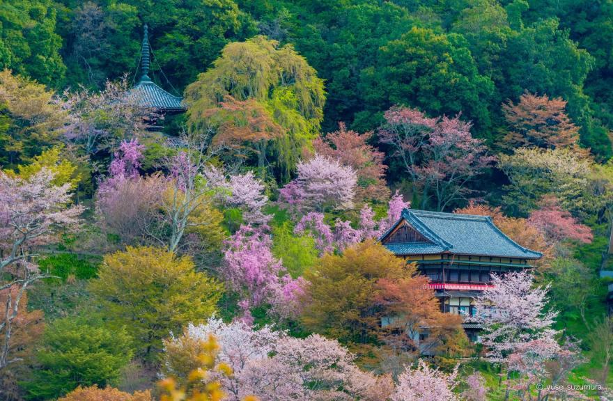 吉野山 神社