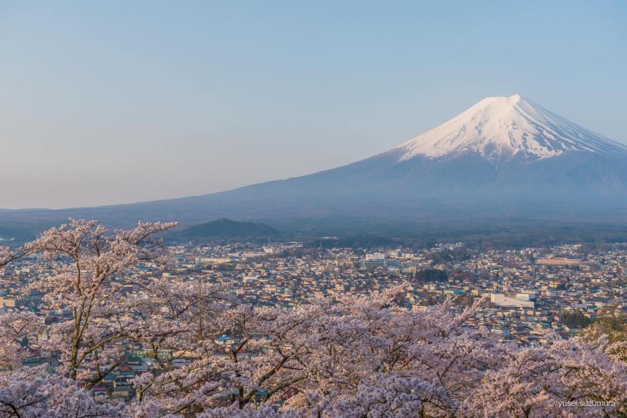 富士山 桜 新倉山浅間公園