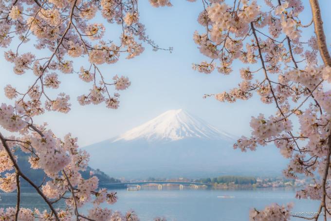 桜と富士山と河口湖