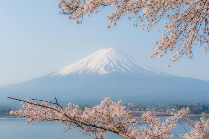 河口湖 雲 富士山 桜
