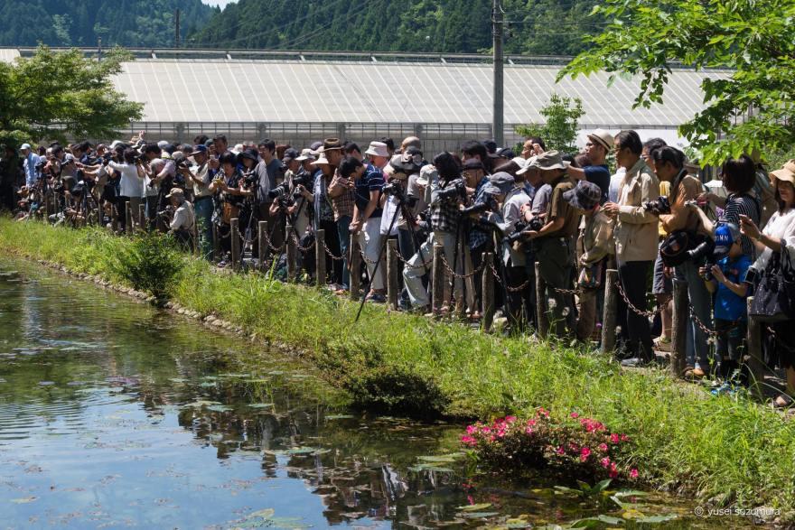 モネの池 撮影者