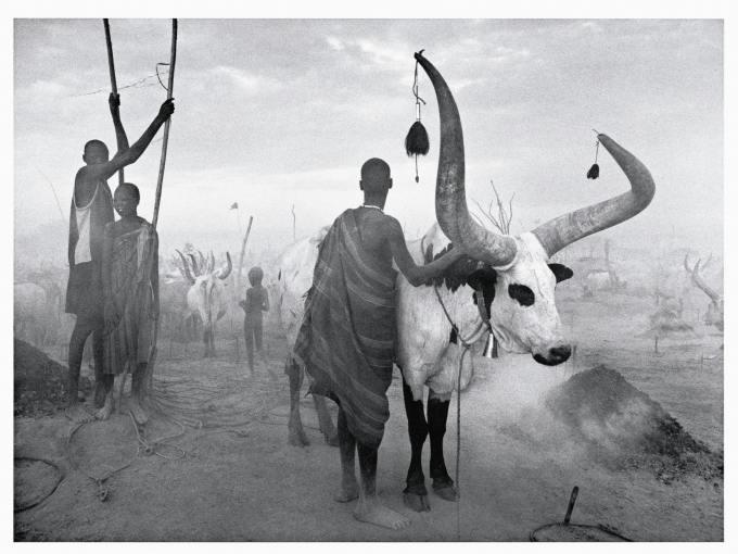 africa salgado