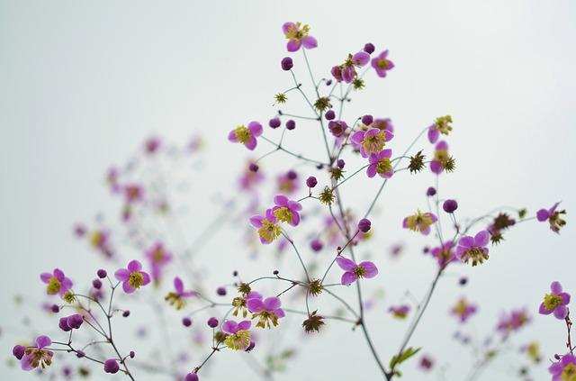 flower-870557_640