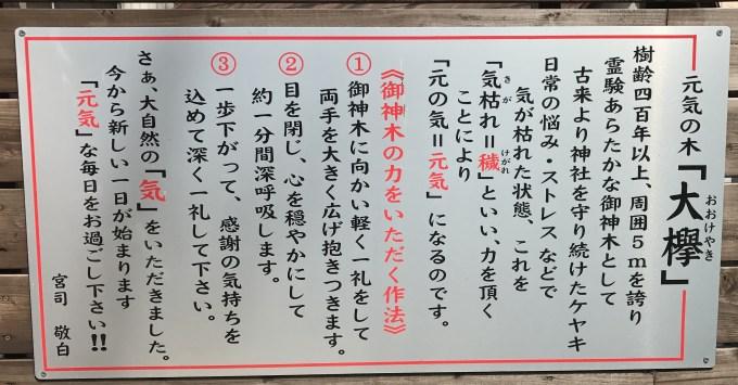 大欅の説明