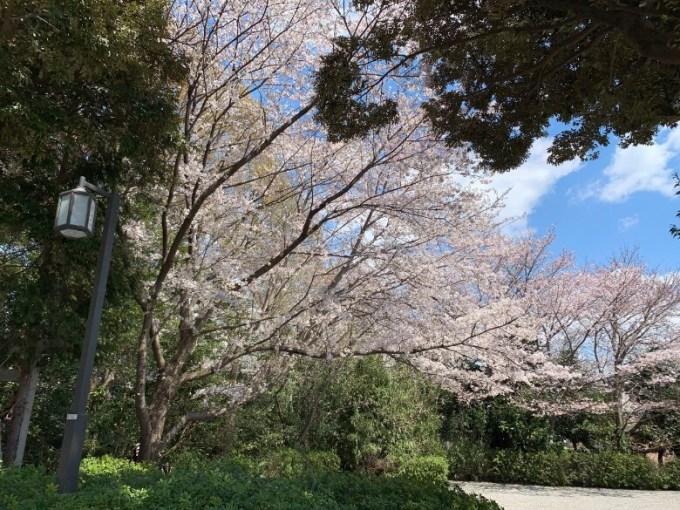 櫻木神社参道脇