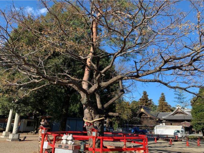 箭弓稲荷神社縁結びの木