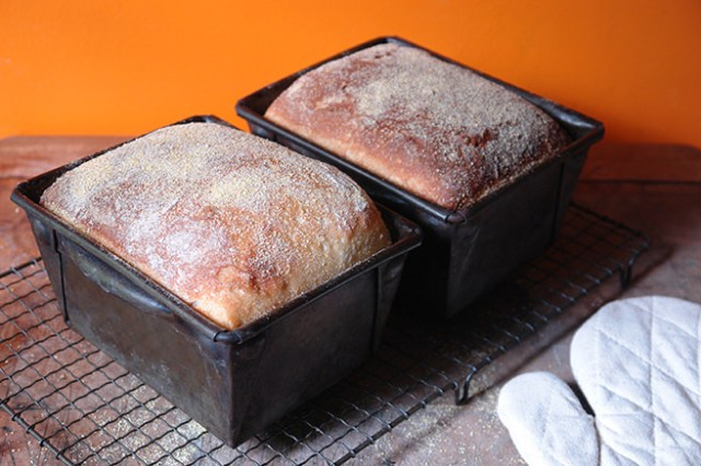 Two cornmeal loaves cooling in their tins on a wire rack | H is for Home