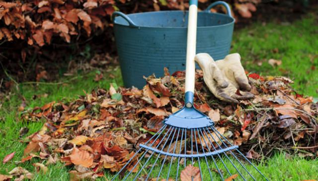 Raking up leaves in a garden