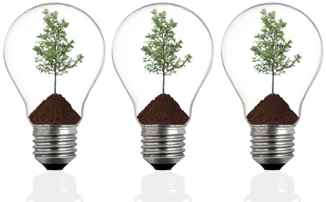 Saplings in light bulbs