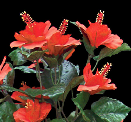Tangerine artificial hibiscus flowers