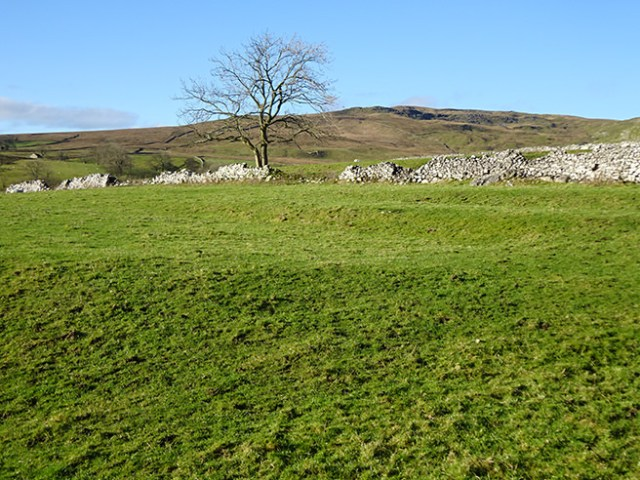 Solitary tree, Malham, Yorkshire Dales | H is for Home