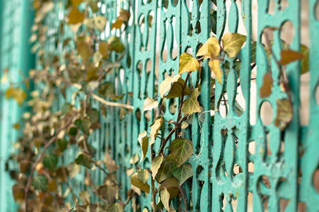 turquoise-painted metal fence