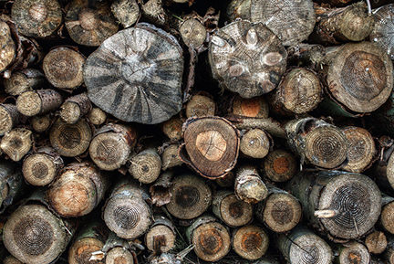 detailed view of a log pile