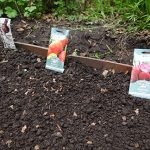 Allotment Diary: Sow & Sow