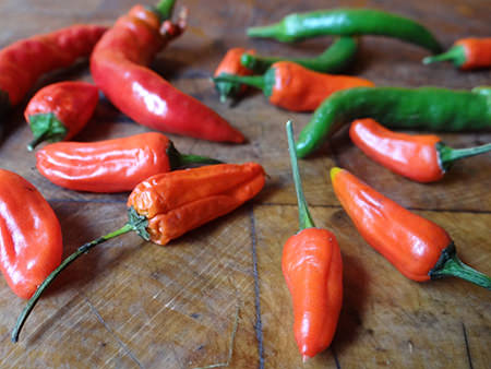 Fresh red and green chillies | H is for Home