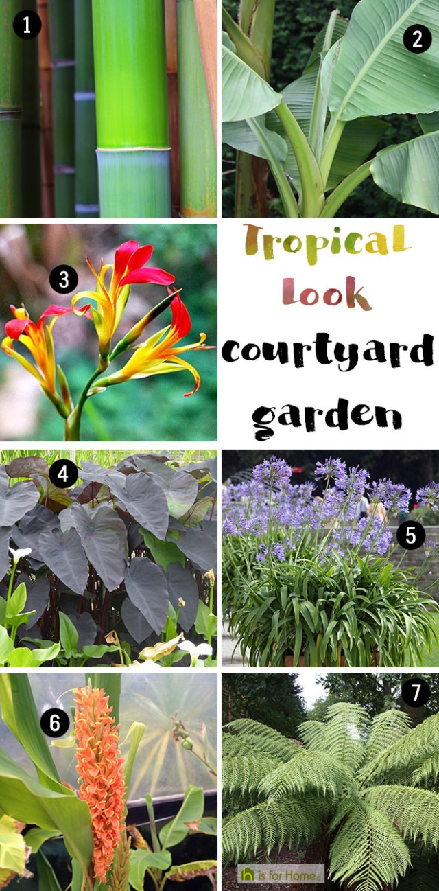 Get their look: Tropical look courtyard garden | H is for Home