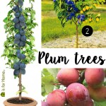 Price Points: Plum trees