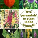 Gimme Five! Perennials to plant in the summer