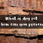 What is dry rot and how can you prevent it?