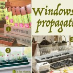 Price Points: Windowsill propagators