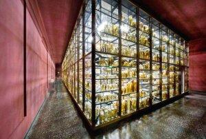 Музей естественной истории, Берлин, Германия