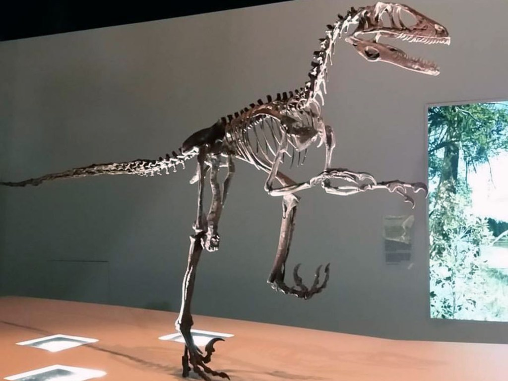 hmns dinosaur 2