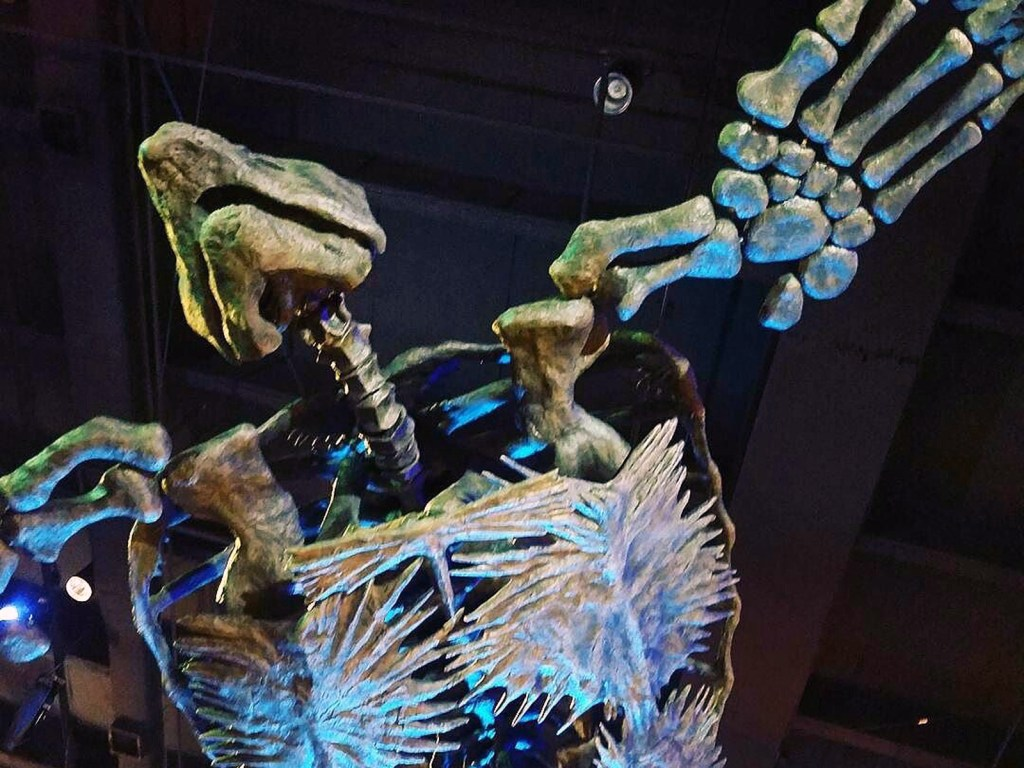 hmns looking up 3