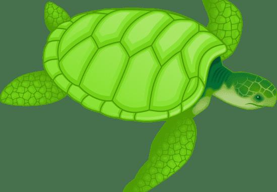 Maximas y minimas: la tortuga, un tributo a la resignación