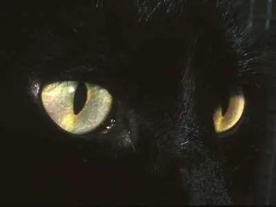 Con fabulaciones: el gato y el país de maravillas