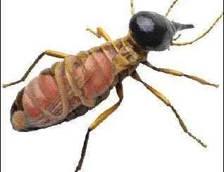 Bienes raices: termitas