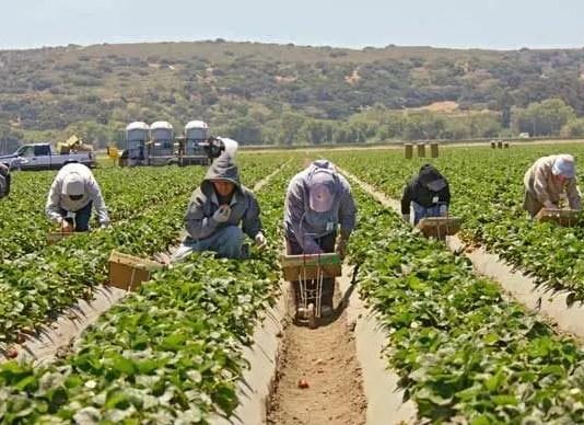 Piden legalizar a trabajadores agrícolas en día de césar chávez