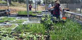 Vegetables for the community in riverside county
