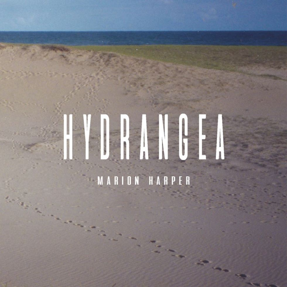 Marion Harper - Hydrangea 2018