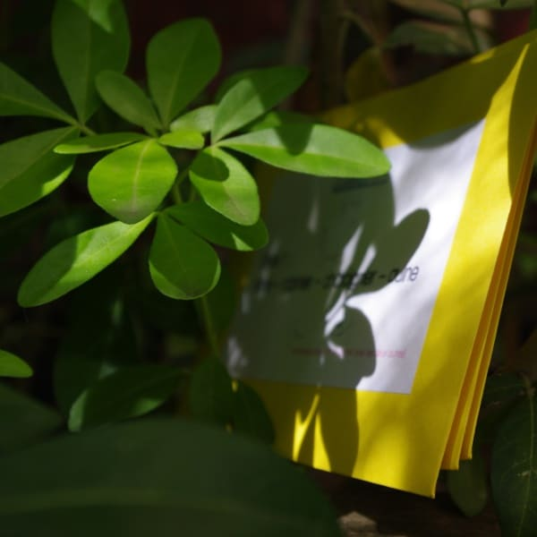 engame enveloppe a cacher chasse au trésor coffret hua histoires d'anniversaire jardin 9 ans 10 ans 11 ans