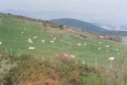 Les Tartiers en 1988