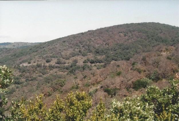 Yeuseraie route de Sournia en juin 2009