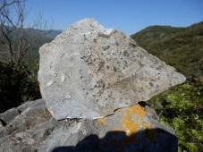 Lauze de calcaire, vallée de la Désix à Sournia, faille nord - pyrénéenne. A la cassure les loges sont pleines.