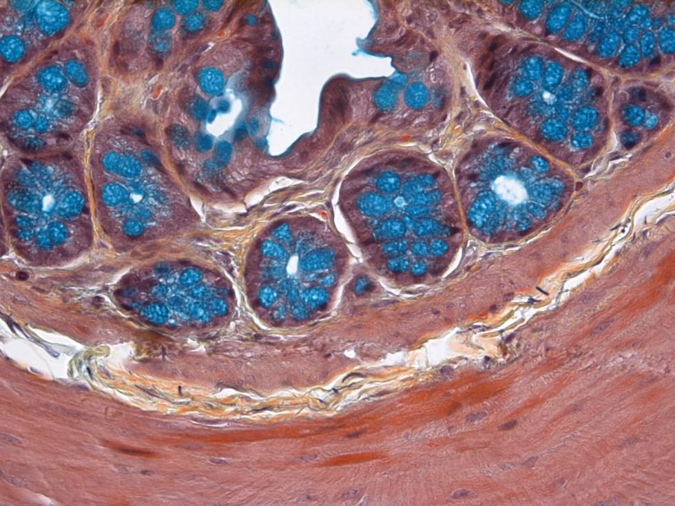 Histology stain