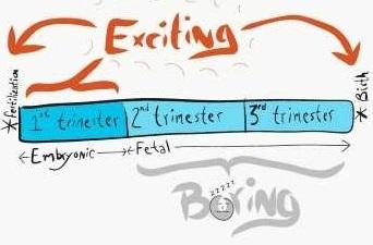 http://histologyandembryology.com/images/6humandev.jpg
