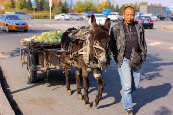 conducir china burro